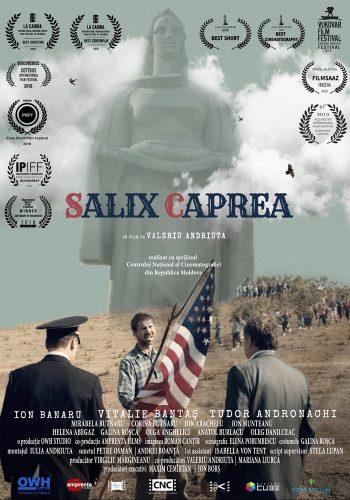 SALIX_CAPREA